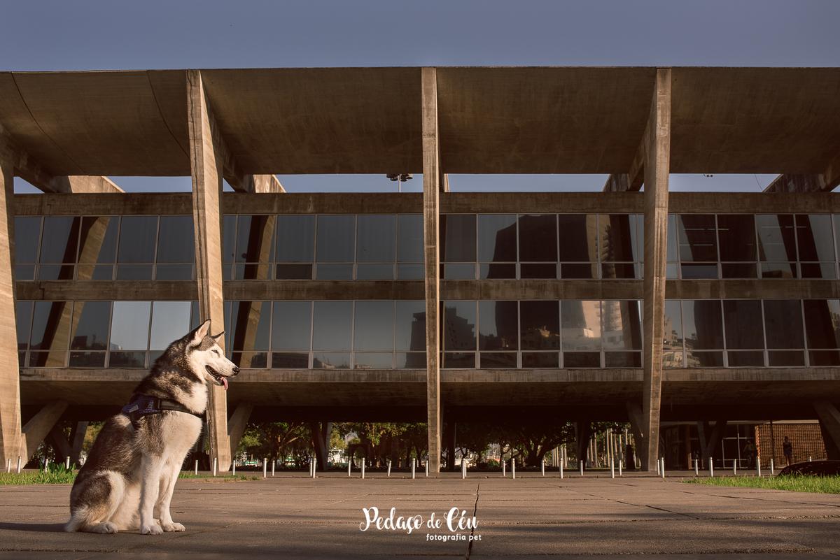 Imagem capa - Projeto Fotográfico Pet Cãorioca da Gema Parte 2 por Daiane Oliveira