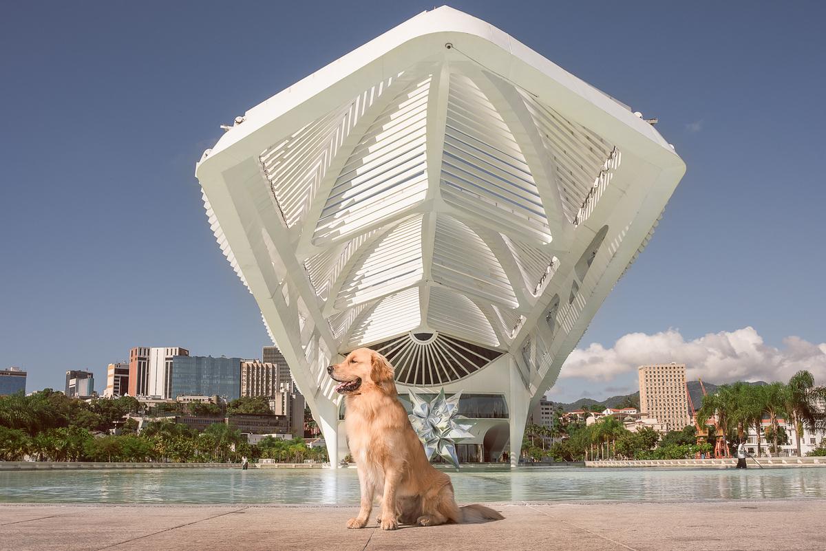 Imagem capa - 5 Locais para Ensaios Pet no Rio de Janeiro por Daiane Oliveira