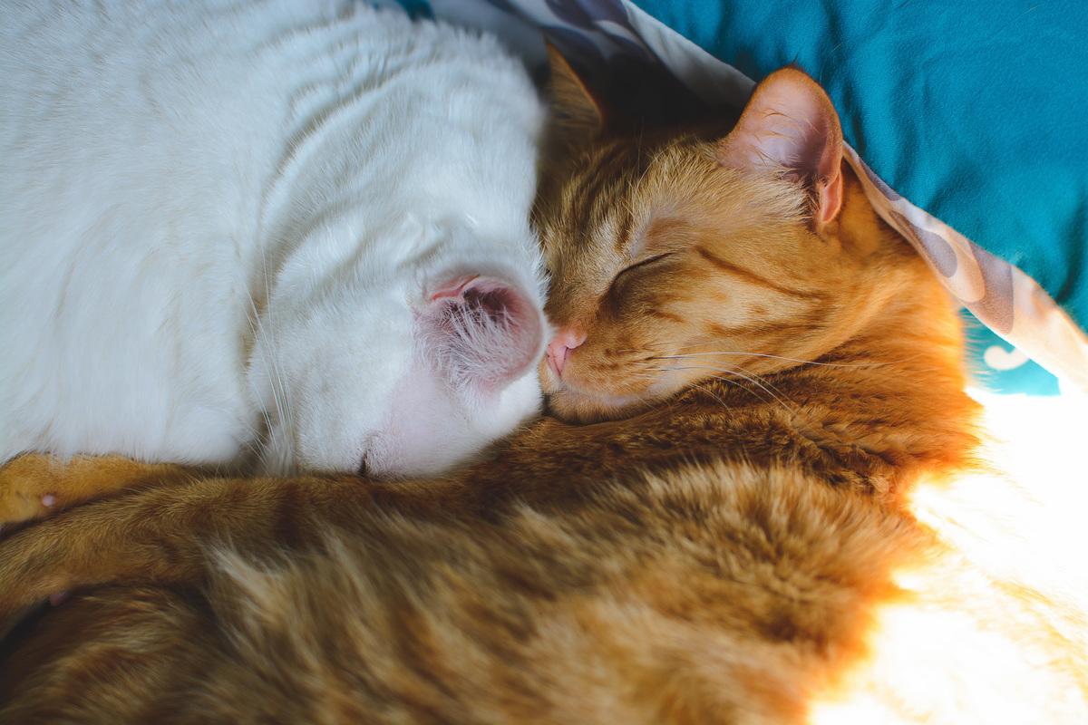 Imagem capa - Inclua seu animalzinho nas suas fotos! por Ana Saito