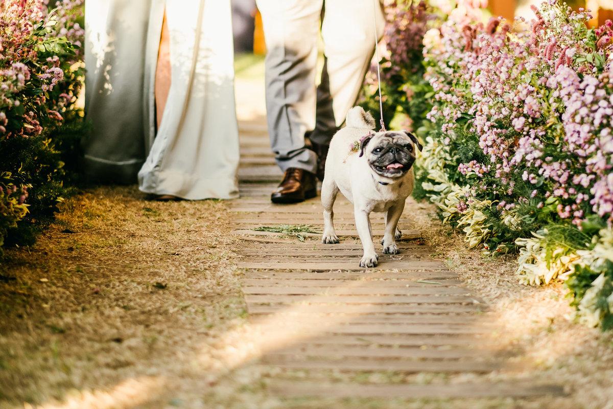 Imagem capa - Pets No Casamento: Dicas Para O Convidado Especial por EF Cerimonial