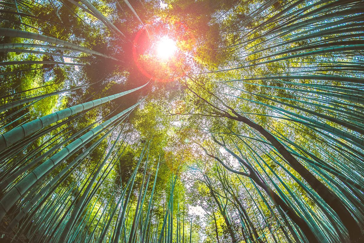 Imagem capa - Seja um bambu japonês! por KassioKM