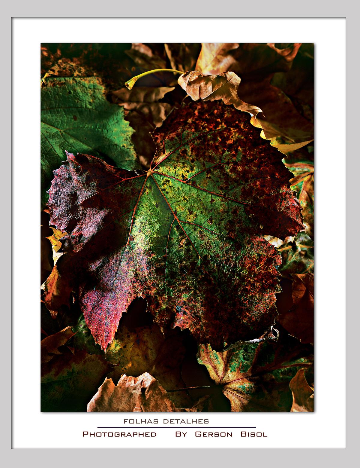 Imagem capa - As Folhas por Gerson Bisol