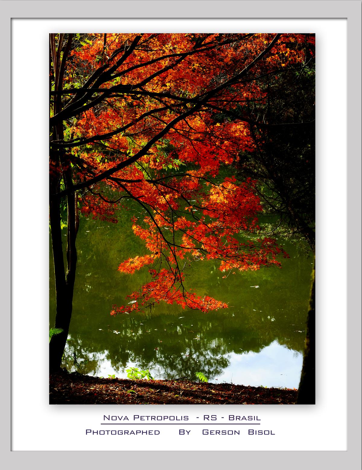 Imagem capa - Outono na Serra Gaucha por Gerson Bisol