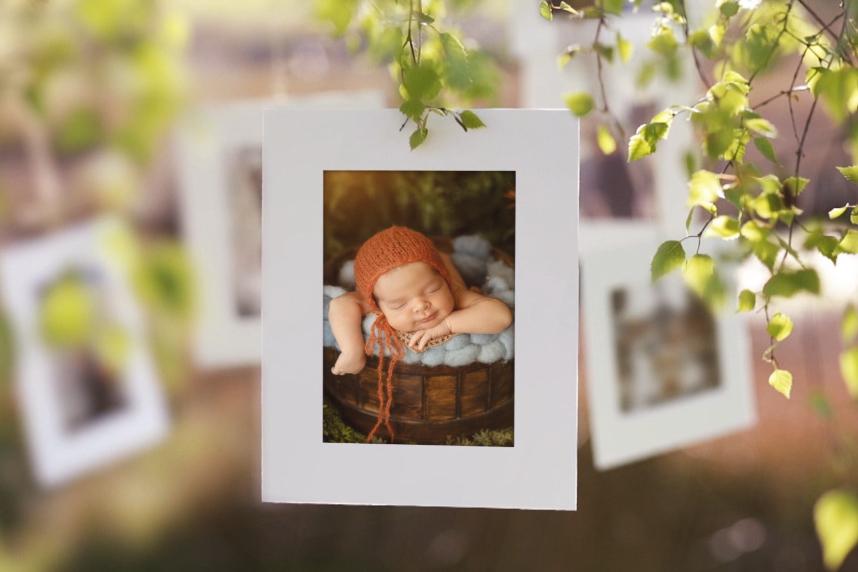 Imagem capa - Sobre meu jardim por Sandra Villani Fotografia