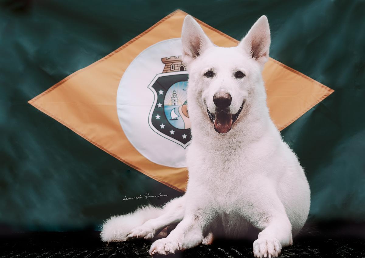 Imagem capa - Canil Raised by Wolves  - Pastor Alemão e Pastor Branco Suíço por Leonardo Gonçalves