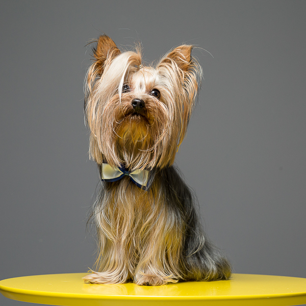 Contate 5 dicas para comemorar a Festa Junina com seu Pet - Santo Chico - Fotografia Pet - Thais Mazzoco