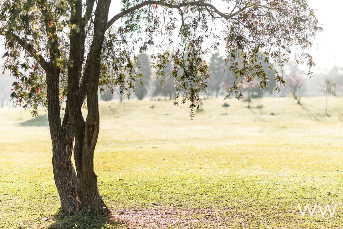 ensaio pré wedding são paulo parque ecológico do tietê