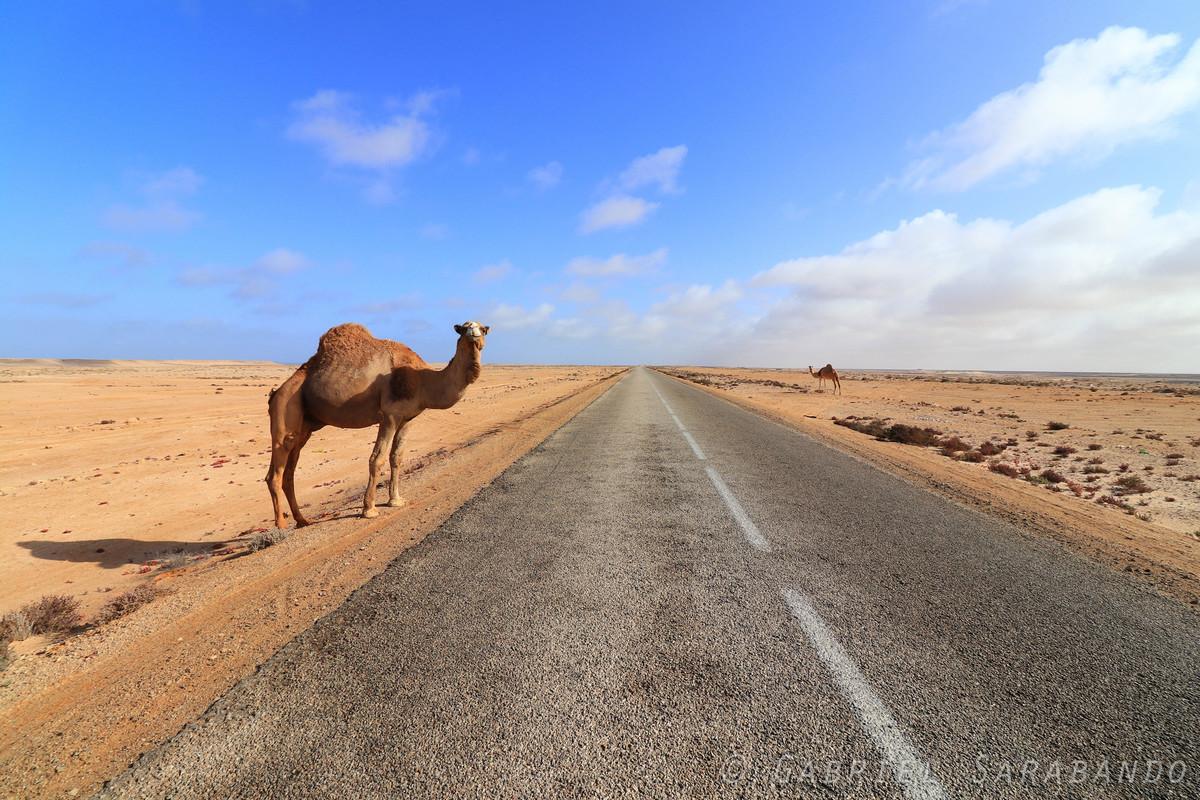 Imagem capa - Saara Ocidental por GabrielSarabando