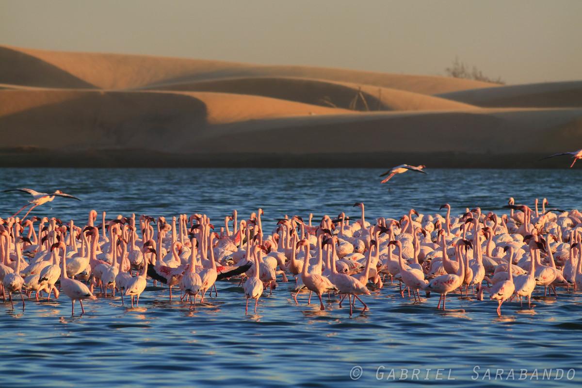 Imagem capa - Namíbia por GabrielSarabando
