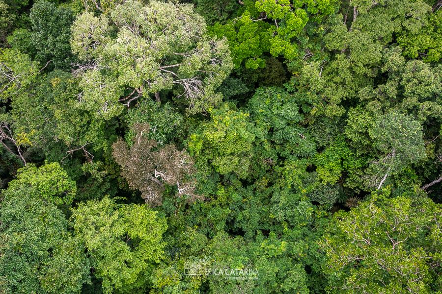 Imagem capa - {Viagens} De volta ao Amazonas <3 por Erica Catarina Pontes