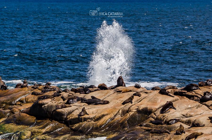 Imagem capa - {Viagens} Cabo Polônio - Uruguay por Erica Catarina Pontes