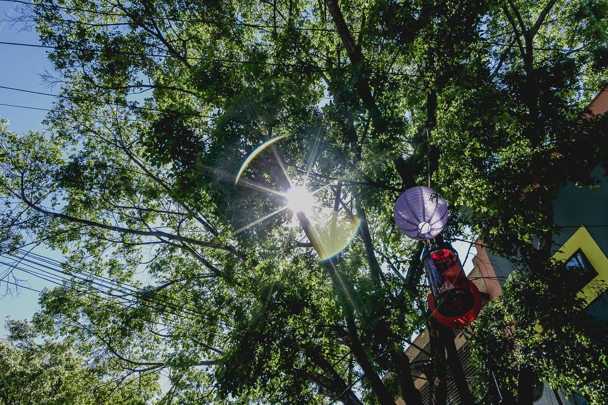 raio de show passando pelas folhas das arvores do buffet miniland tree