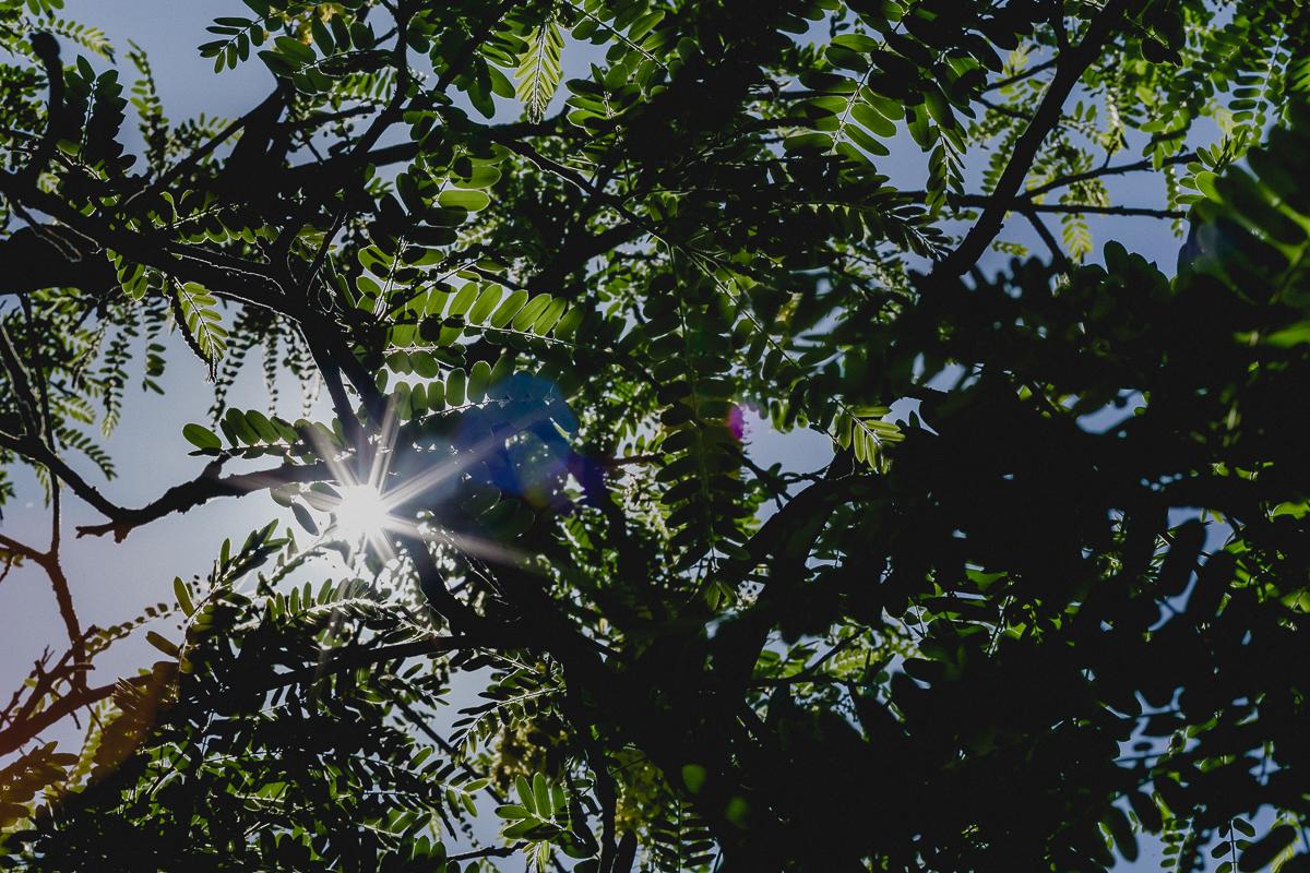 sol entre as folhas da arvore