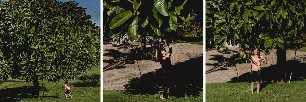 criança pegando frutas no pé