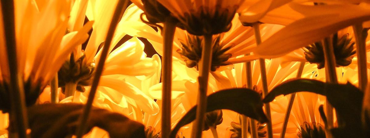 Imagem capa - De Vaso à Floresta em 1 Clique por Guilherme Pimenta