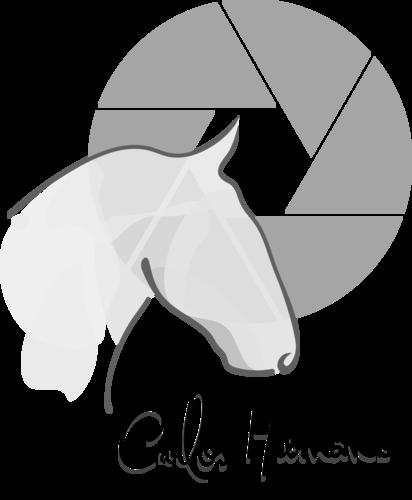 Logotipo de Carlos Hernâni