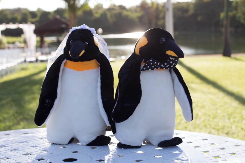 Imagem capa - Amor de Pinguim por Gersiane Marques Fotografia