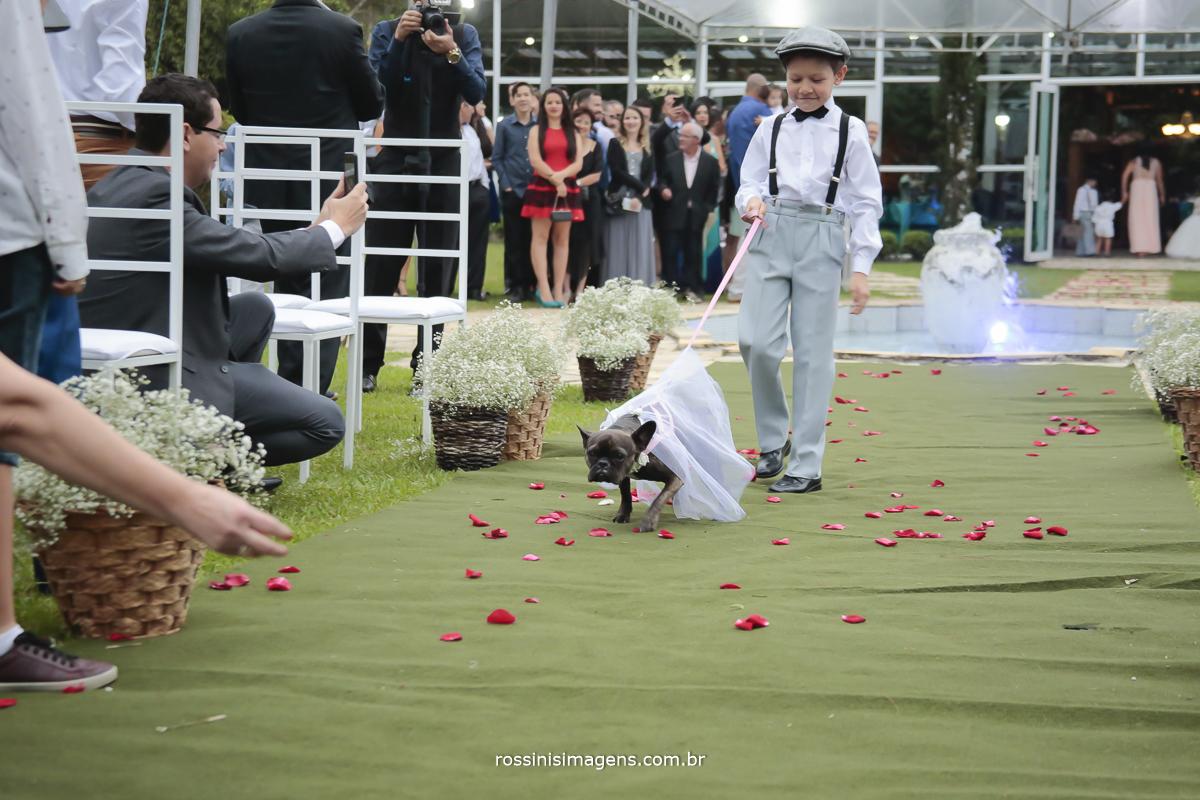 a entrada muito fofa do pagem trazendo a Dory  cão de estimação do casal para o casamento, cachorro entrando no casamento, cão da raça pug francês entrando no tapete