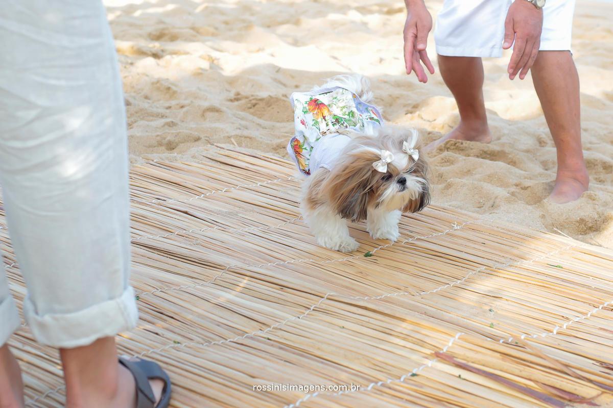 pet entrando com as alianças dos noivos, entrada do pet, wedding, casamento na praia com Pet