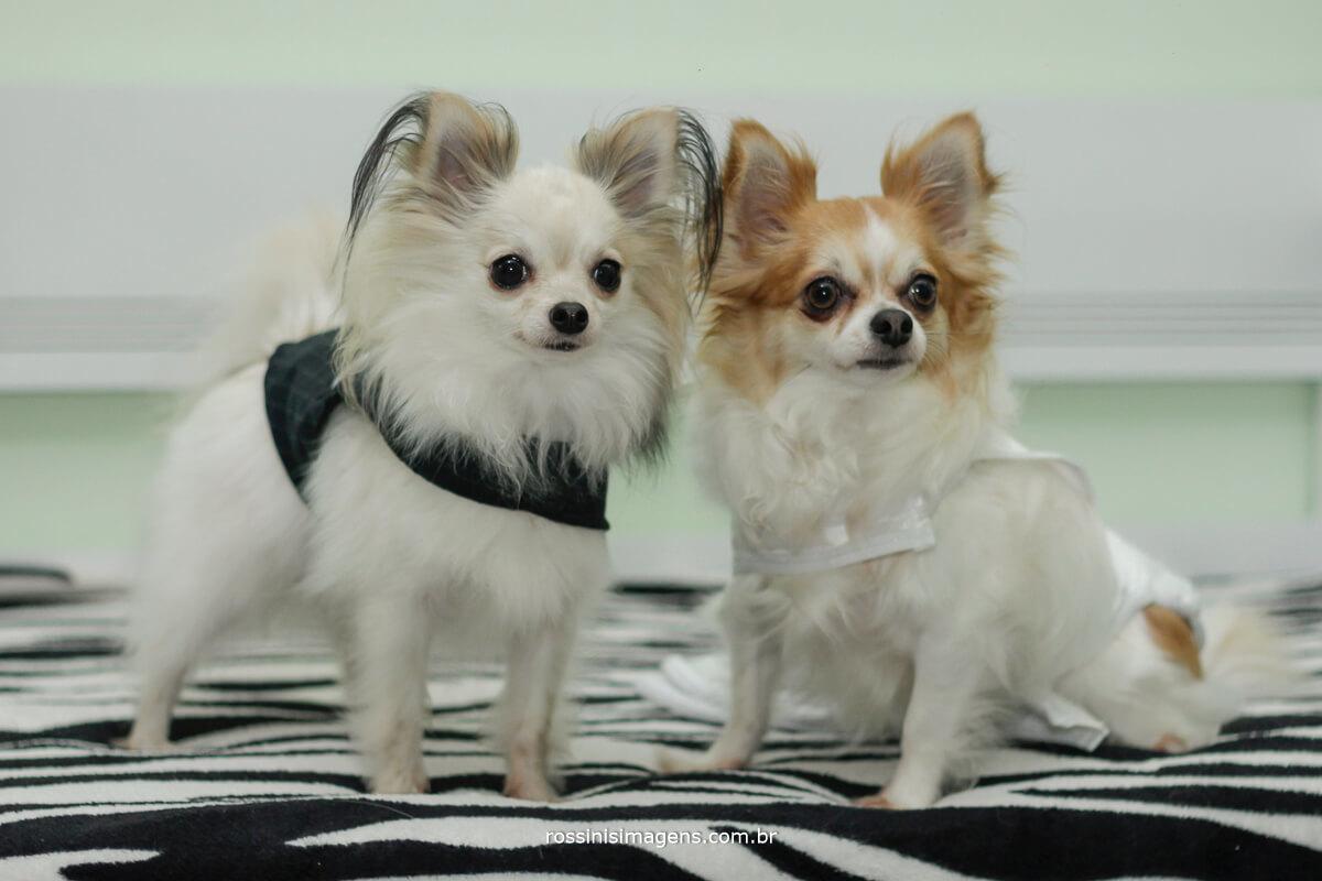 pet dos noivos de noivinhos, cachorrinhos vestidos de noivos