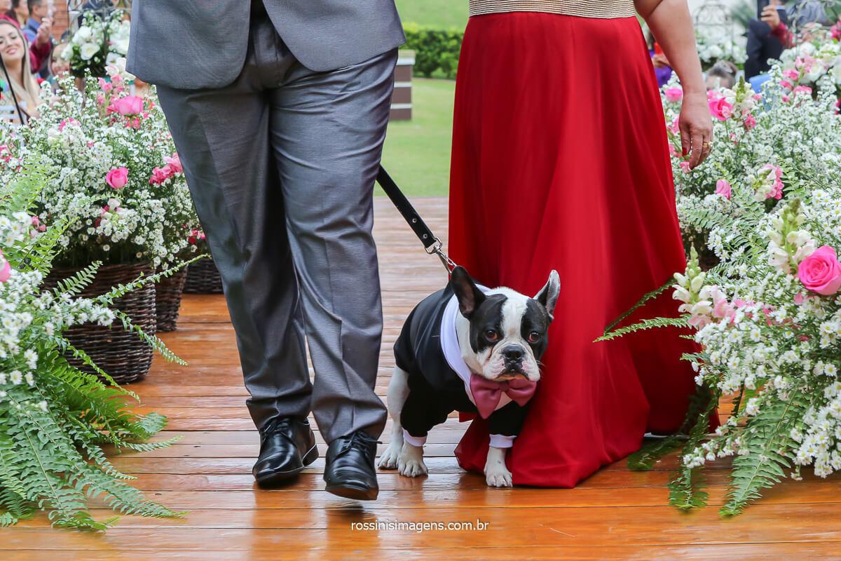pug no casamento, noivo com dog, casamento com pet, noivo entrando com o pet