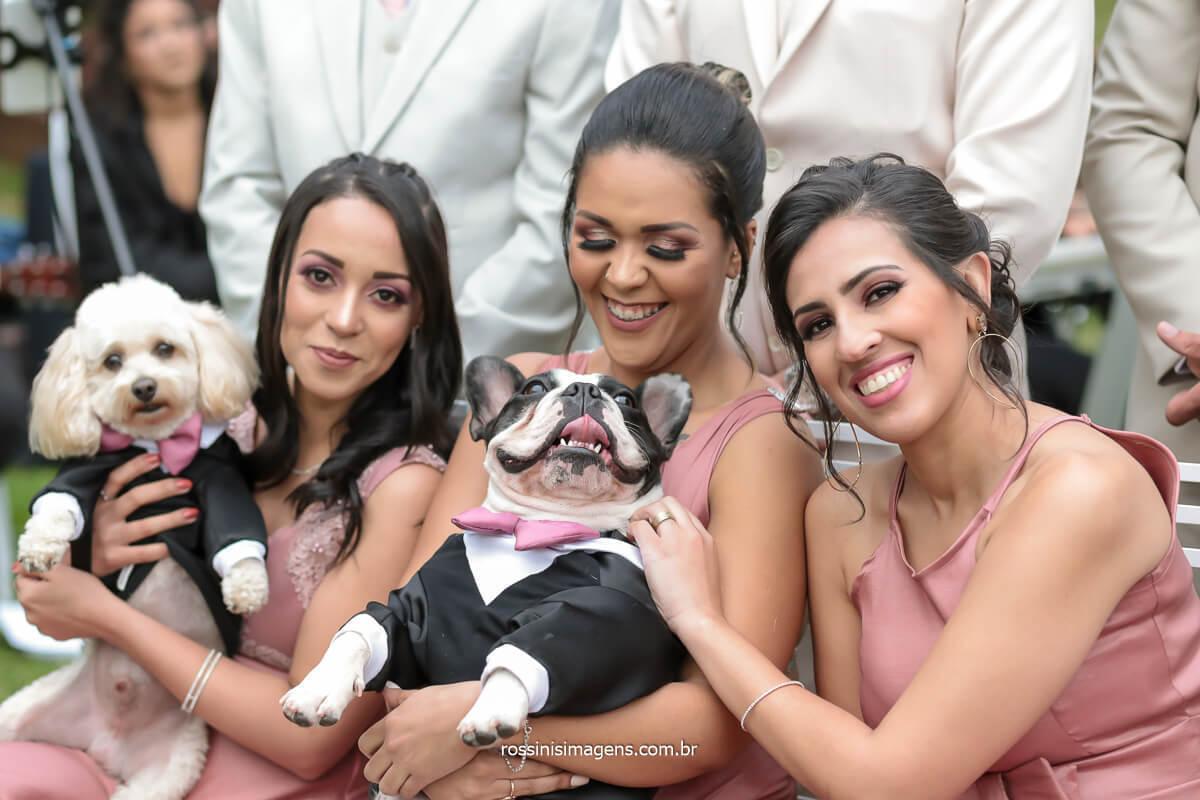 Fotografo de casamento apaixonado por pet Madrinhas com os pets dos noivos, pets no casamento