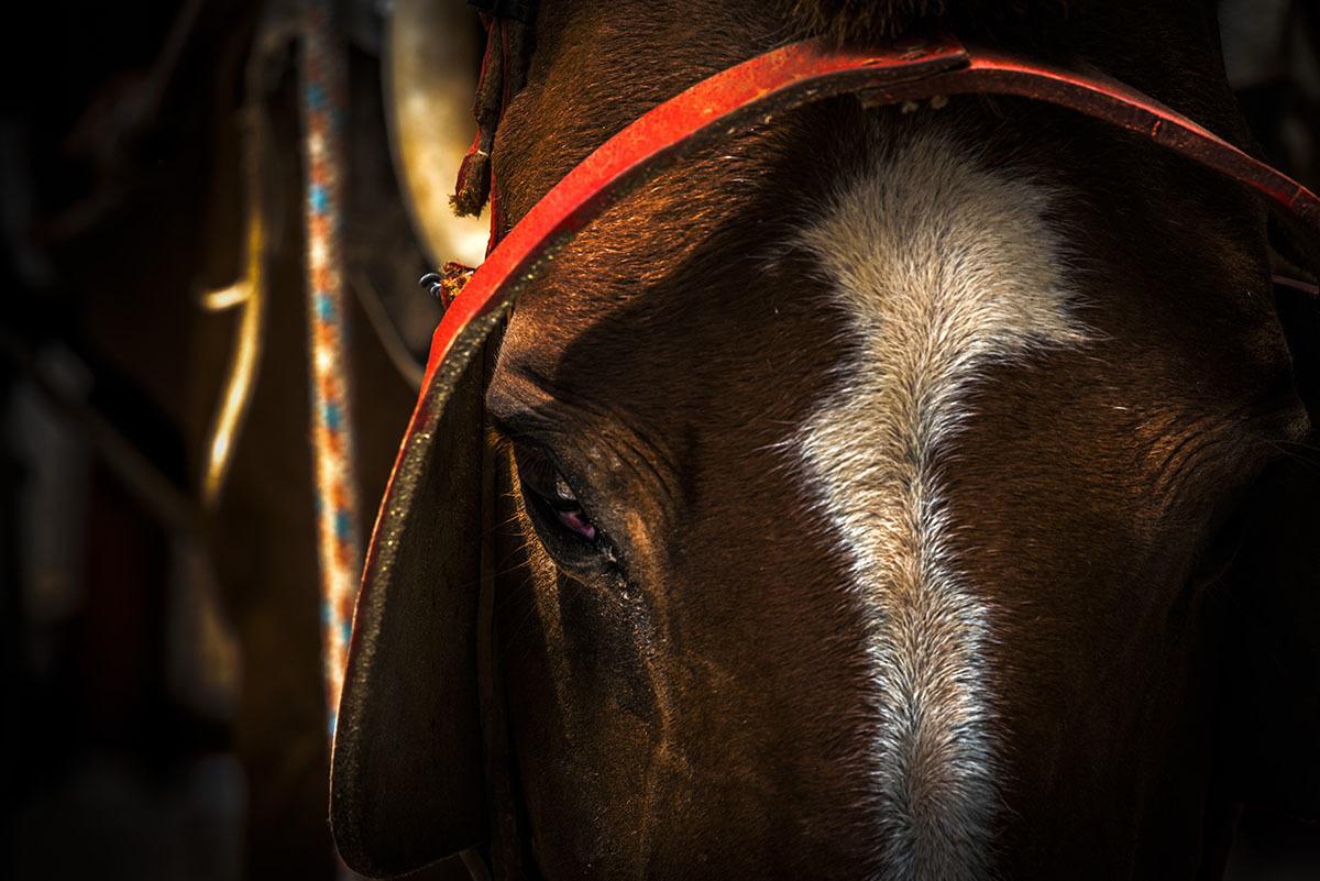 Imagem capa - Cavalo, no galope das histórias e  lembranças por Dennis Calçada