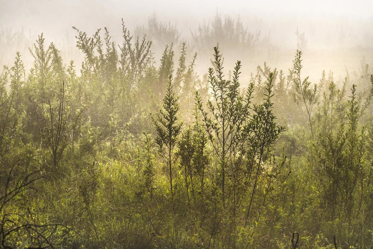 Imagem capa - Dennis Calçada é selecionado em concurso nacional de fotografia de natureza promovido pela Hahnemühle e revista FHOX por Dennis Calçada