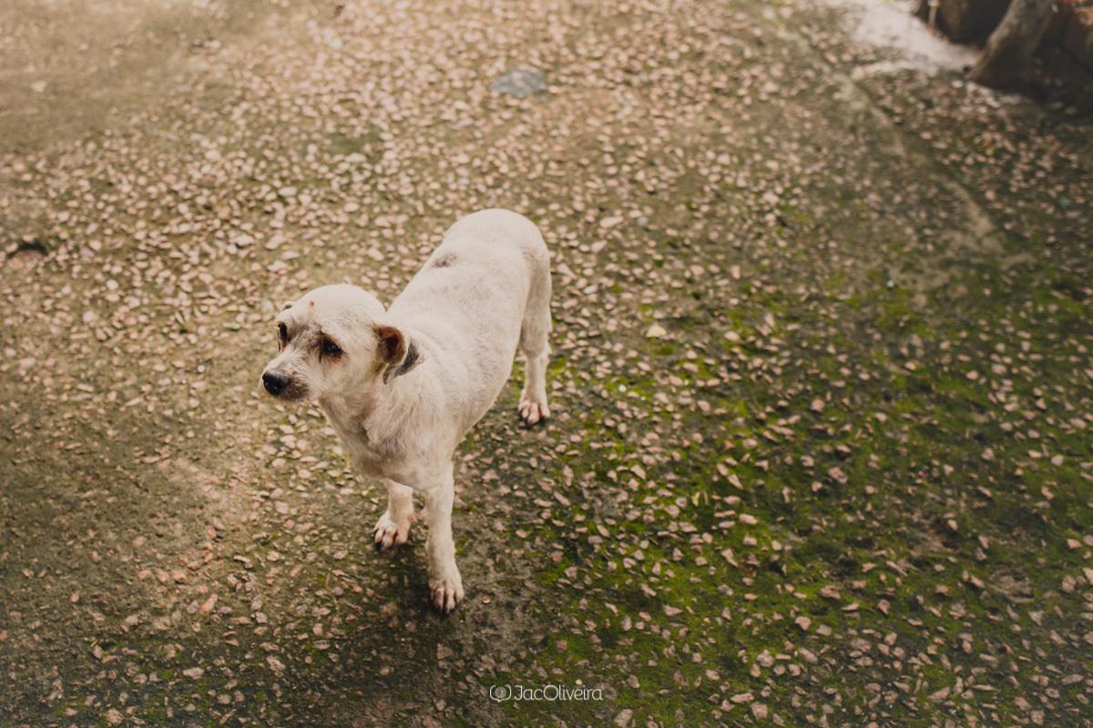 cachorrinho no aniversario infantil em charqueadas fotografia documental