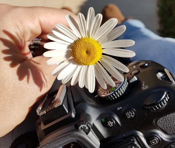 Contate Di Máximo - Fotógrafa de Família/Infantil & Ensaios/Retratos
