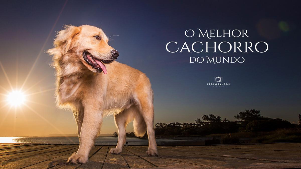 Imagem capa - O Melhor Cachorro do Mundo!!! por Pedro Santos