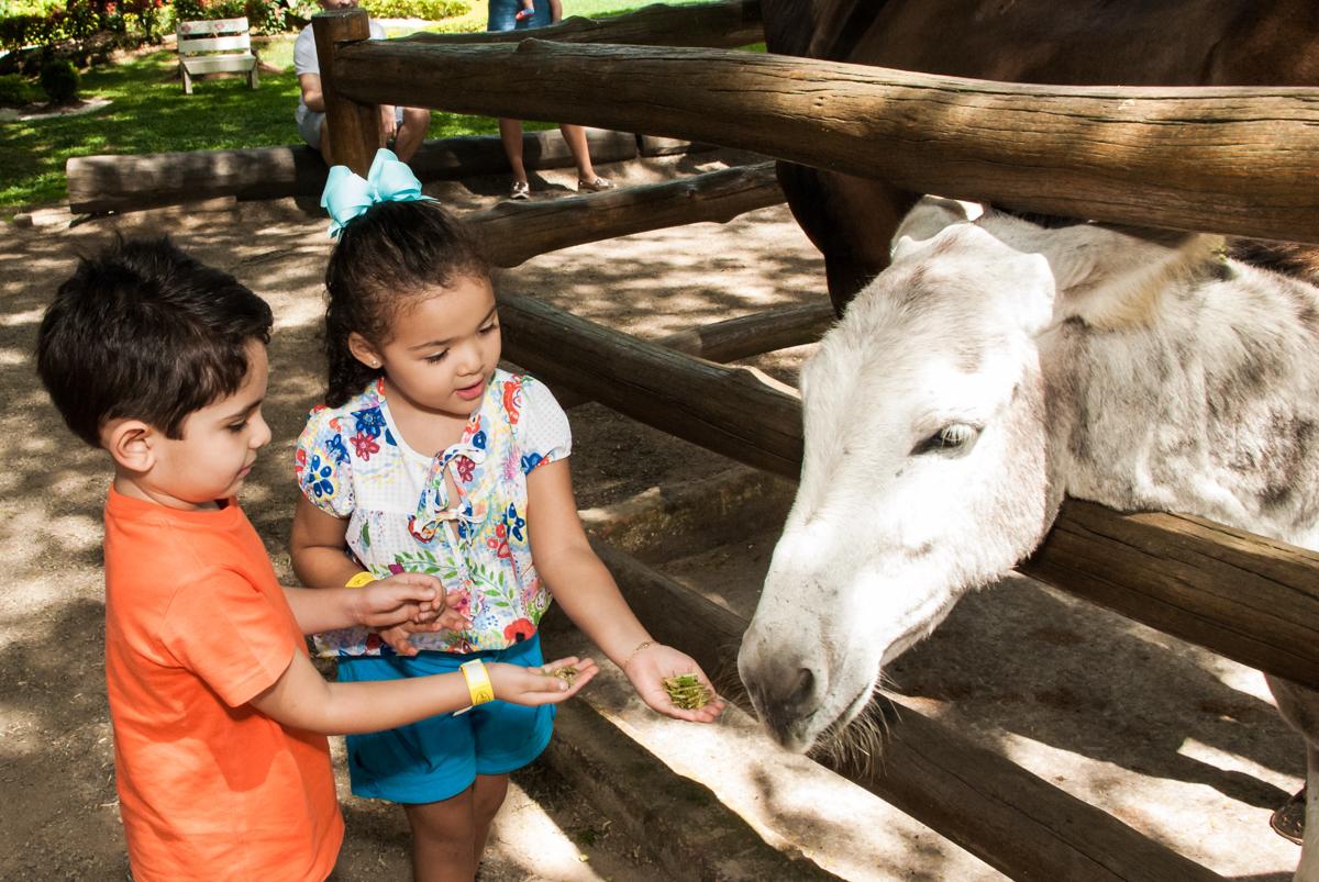 brincando com o cavalo no Buffet Pet Zoo, Cotia, São Paulo, aniversário de Maria Clara 4 anos, Buffet Pet Zoo, Cotia, São Paulo, tema da festa Dora a Aventureira