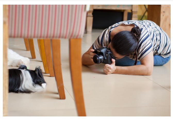 Sobre Retratinhos Pet - Fotografia de animais de estimação - Goiânia