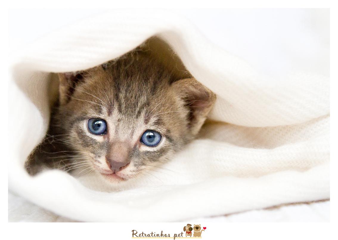 Imagem capa - Dúvidas Frequentes - (FAQ) por Retratinhos Pet
