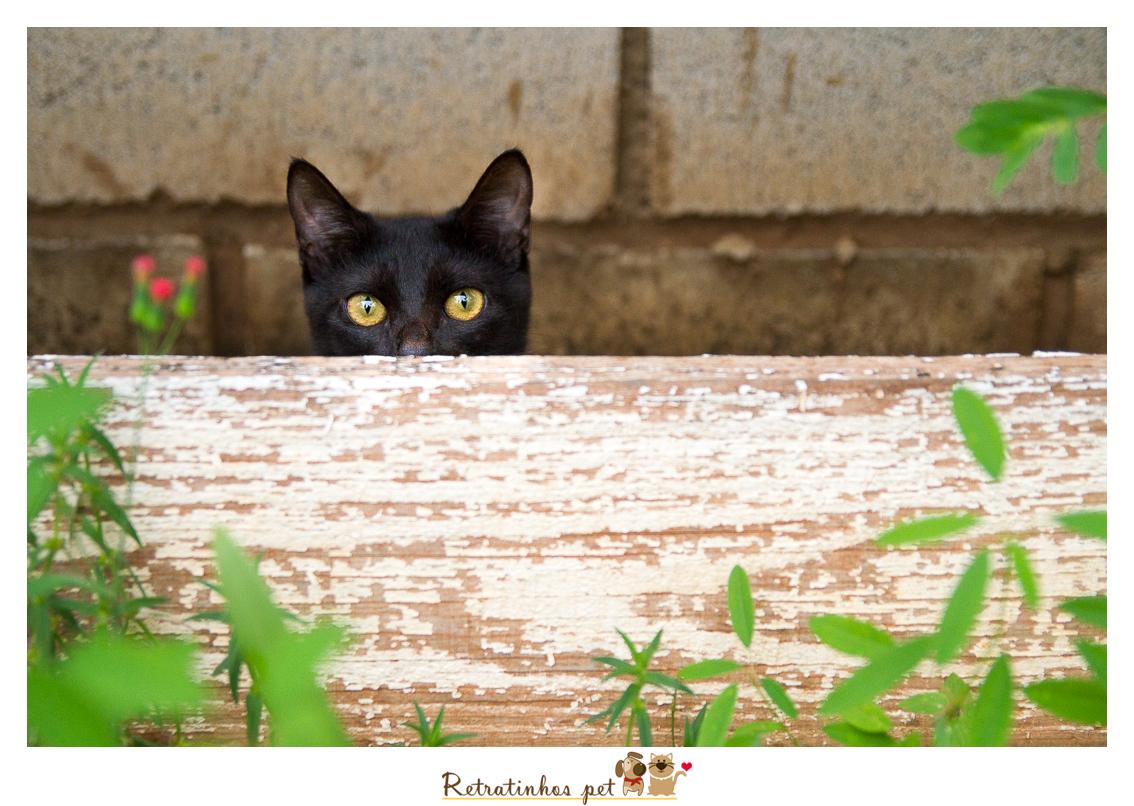 Imagem capa - Gatos Pretos, a origem do preconceito por Retratinhos Pet
