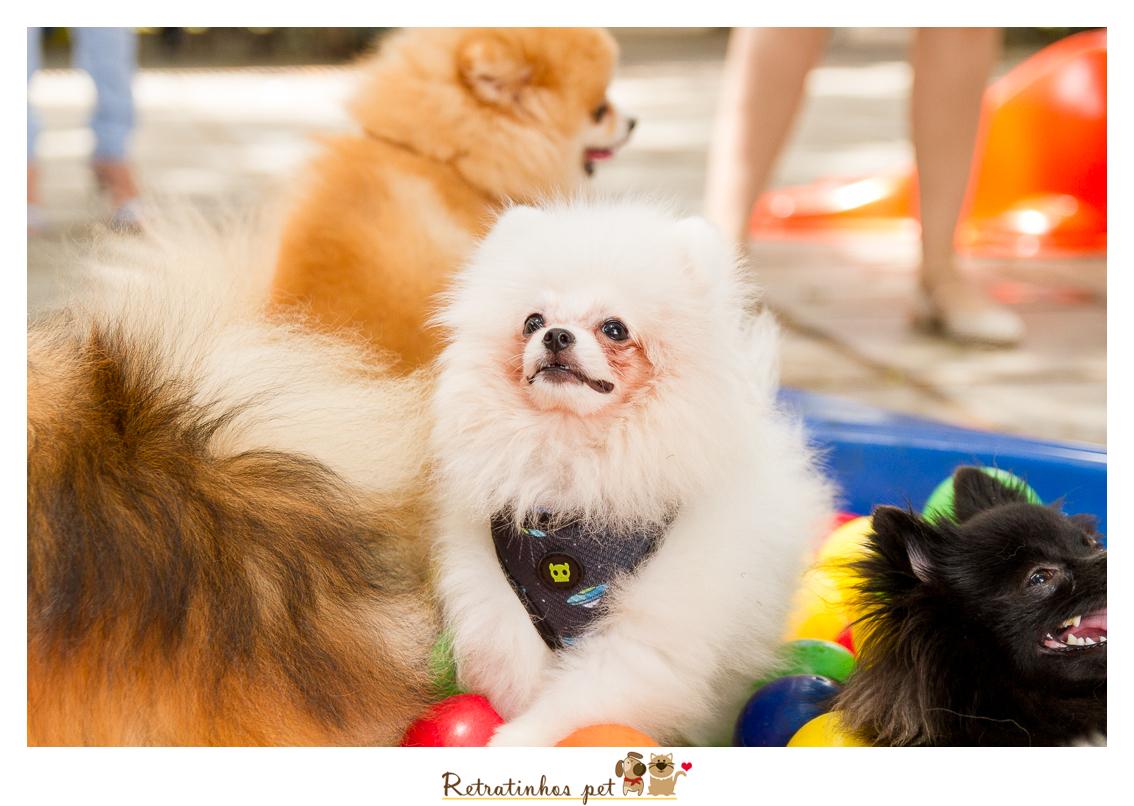 Imagem capa - 2º Encontro de Raças - Spitz por Retratinhos Pet