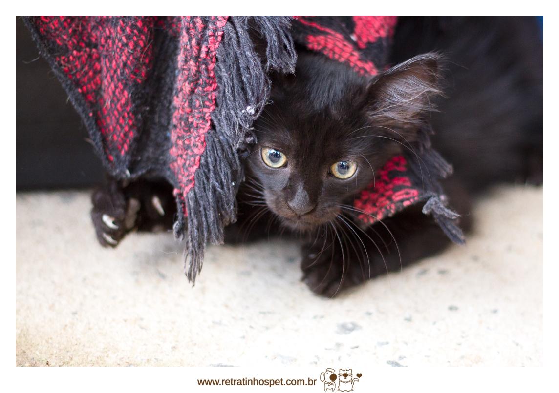 Imagem capa - Abrigo Amigos do Tofú por Retratinhos Pet