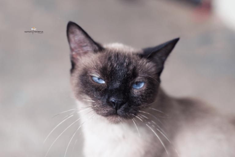 Imagem capa - Os 10 gatinhos - e um cão - mais rabugentos que você verá hoje! por Samara Medeiros Fotografia