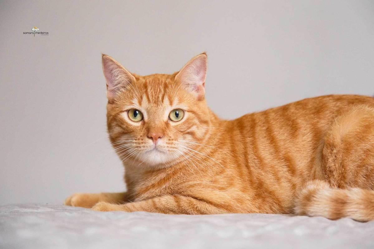 Imagem capa - Homens e gatos - Acabando com o preconceito por Samara Medeiros Fotografia