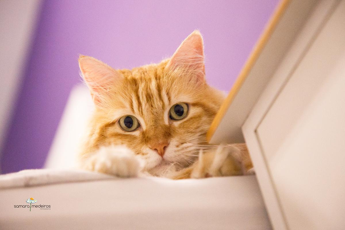 Imagem capa - Adaptando um novo gatinho em casa por Samara Medeiros Fotografia