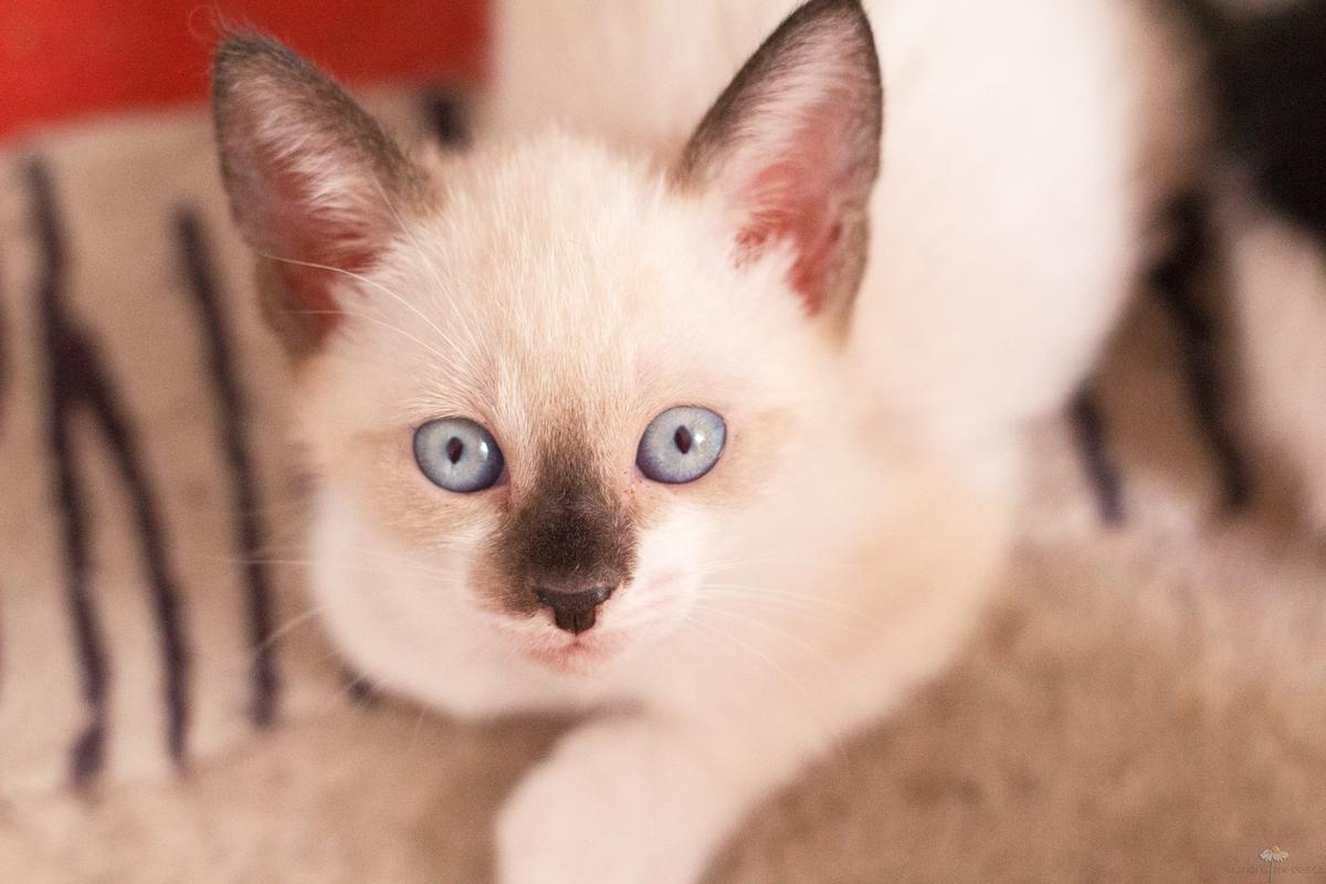 Imagem capa - Meu gatinho tem felv... e agora? por Samara Medeiros Fotografia