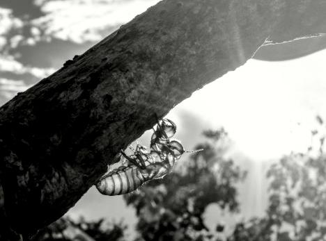 Imagem capa - Diluir-me por Fabio Barella