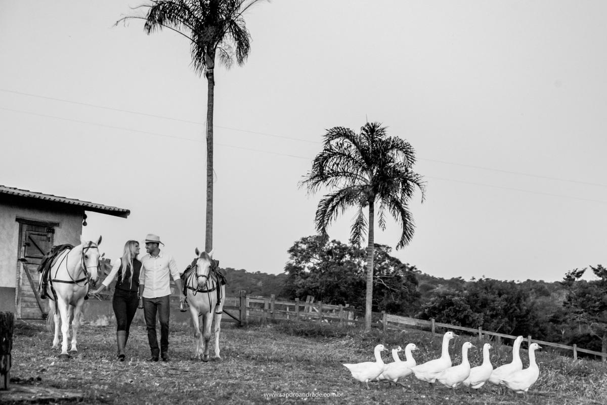 Os patos andando em primeiro plano, o casal vem ao fundo de mãos dadas, se olhando e segurando os cavalos.