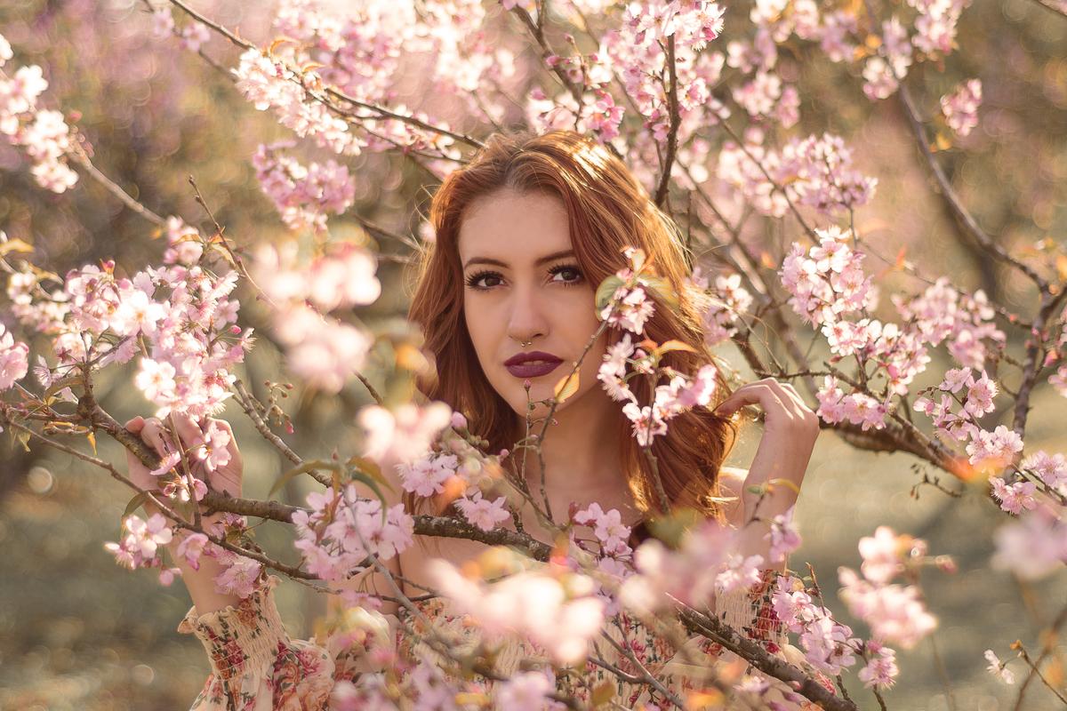 Imagem capa - A festa da cerejeiras! por Kika Rodrigues
