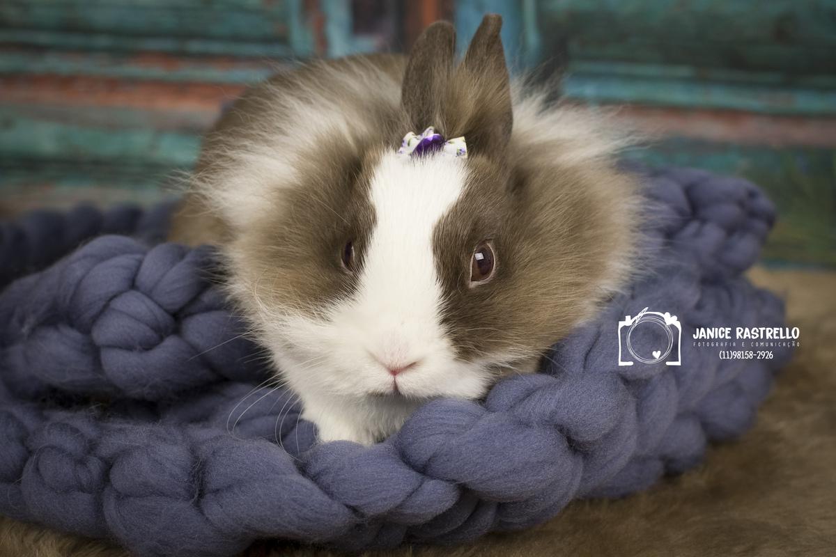 Imagem capa - Bonny - A linda coelha por Janice Rastrello