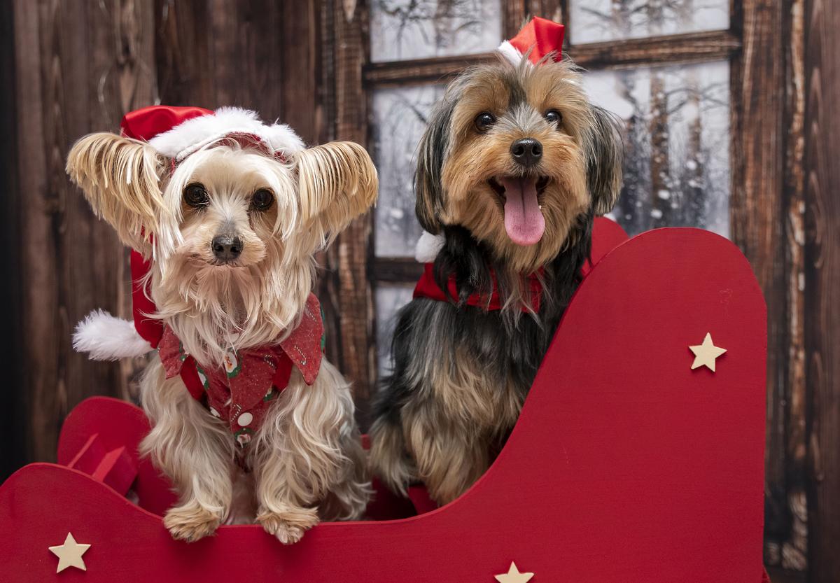Imagem capa - Natal em Família - Thalita e Thayná e seus pets Charlotte e Romeu por Janice Rastrello