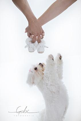 Imagem capa - Ensaio Fotográfico com Pets por Estúdio Gabi Fotografia