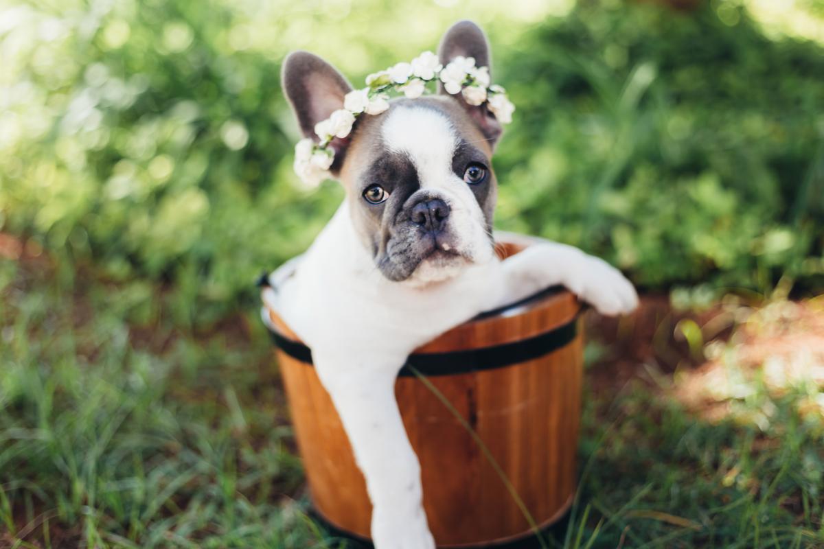 Filhote de cadela, ensaio pet, Brasilia