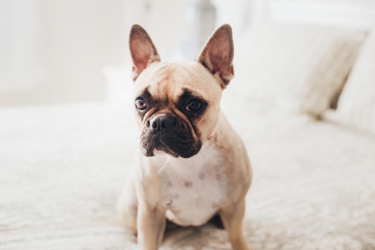 Ensaio Pet lifestyle em Brasilia, Gabi Aine