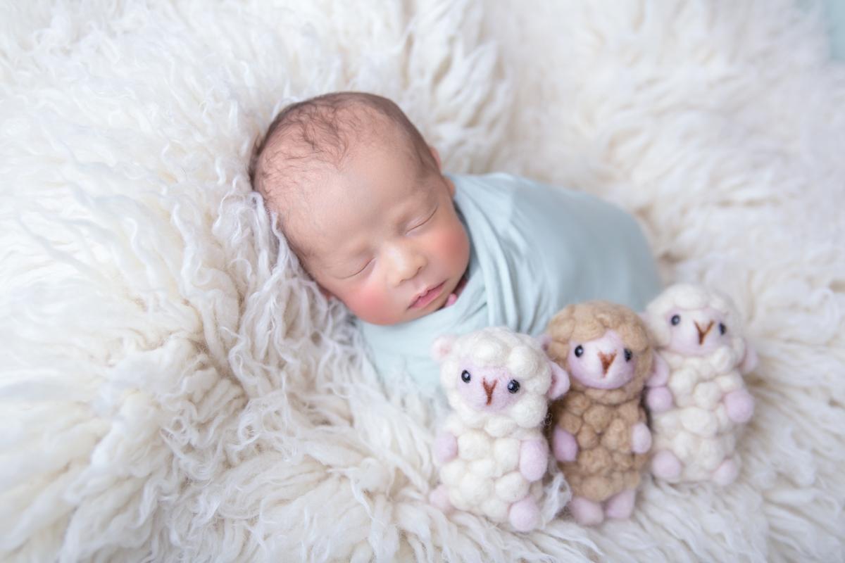 Newborn dose dupla flokati branco em águas Claras DF